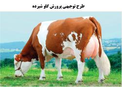 طرح توجیهی پرورش شیری